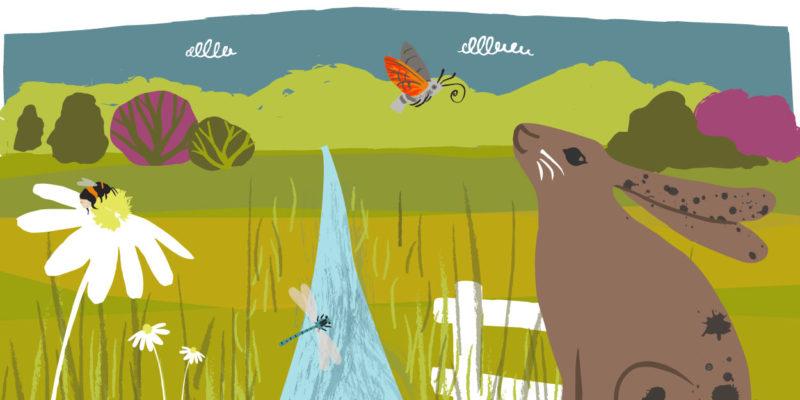 Summer landscape illustration