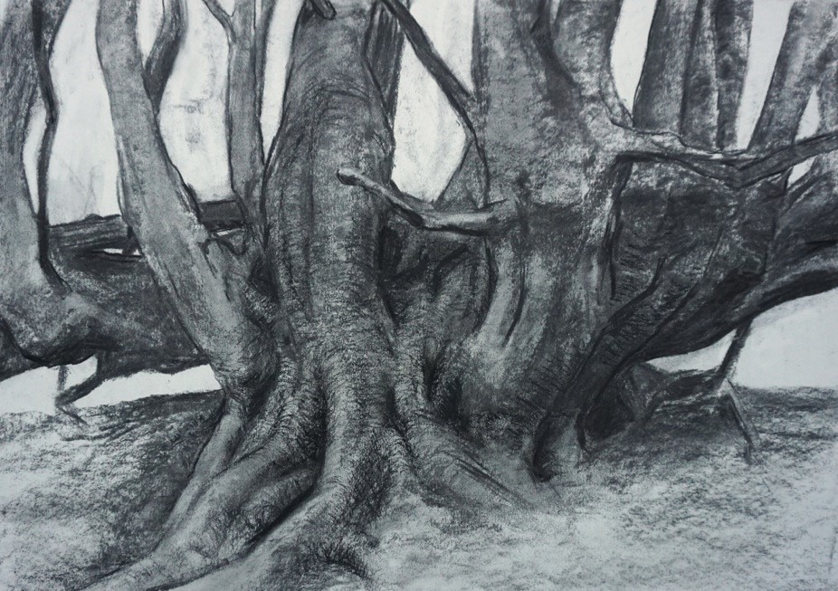 This charcoal drawing is dominated by a mass of thick tree trunks, closely cropped to concentrate on the roots and lower parts of the tree.