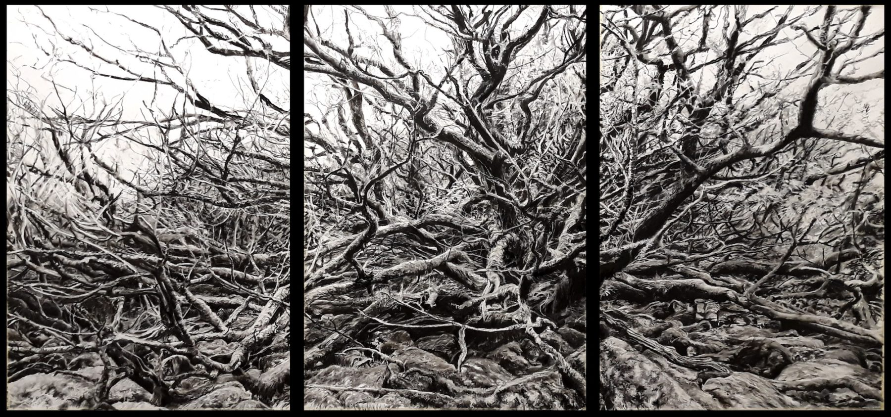 A triptych of images consists of intertwining bare branches in black, white and grey.