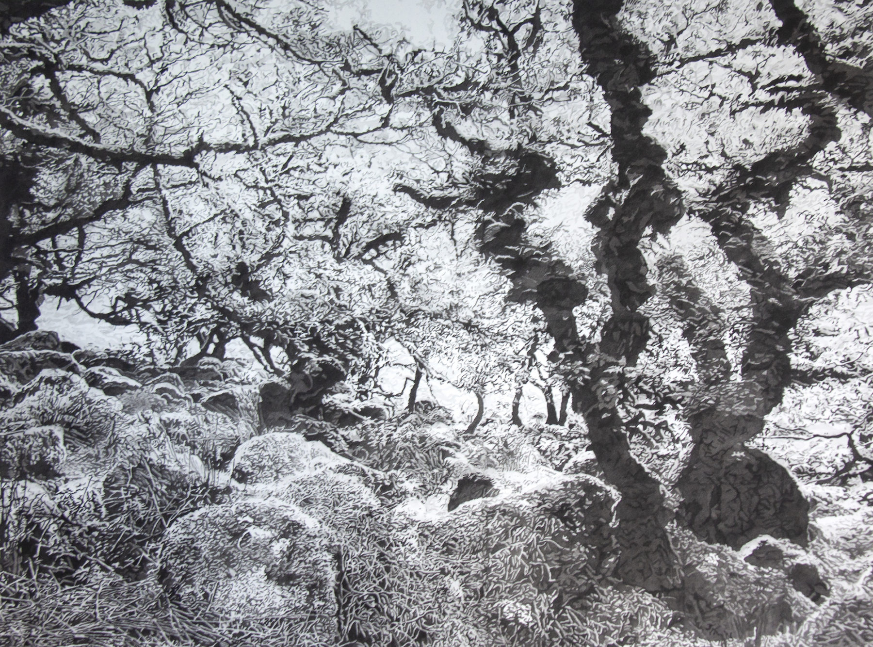 Old Friends is am immensely detailed black and white watercolour of the ancient Wistman's Wood. Twisted and gnarly dark tree branches reach for the sky, while thinner branches with delicately rendered grey leaves extend in different directions. The forest floor is strewn with lichen covered boulders.