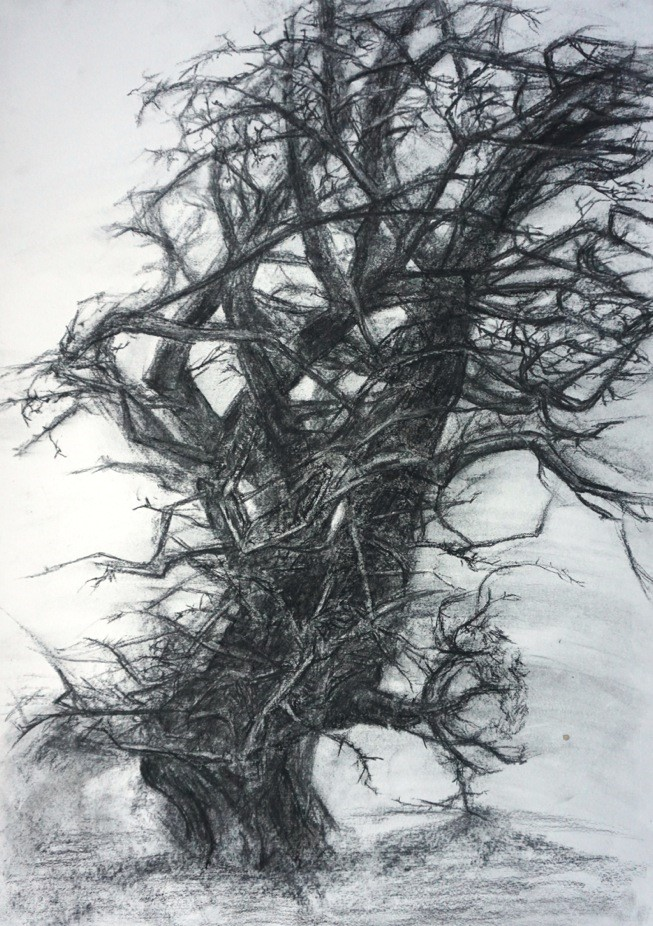 A large knotty thorn tree appears to lean to the right due to a heavy breeze. Smudges in the charcoal indicate movement in the branches.