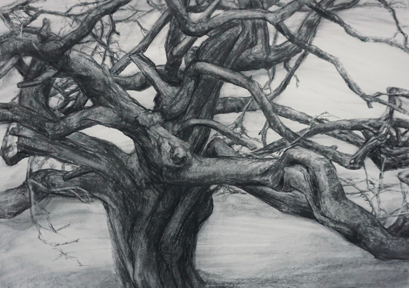 A wide and solid looking tree trunk is topped by a mass of twisting branches of different shapes and sizes.