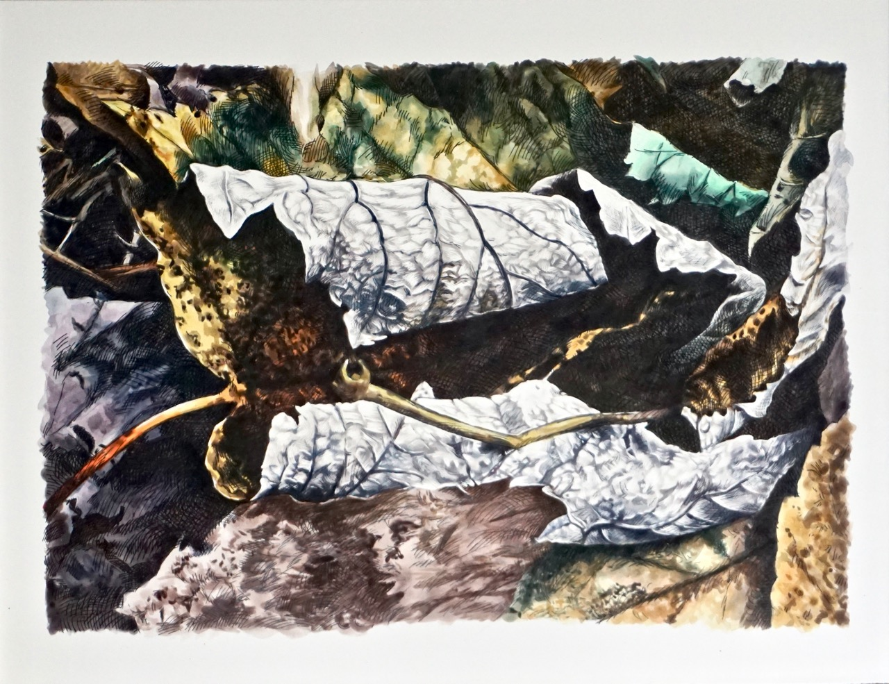 Curling leaves with a white and black outside and mottled brown inside lay curled on the forest floor. There is a high level of detail in the painting, with the veins of each leaf rendered perfectly in ink. Curling leaves with a white and black outside and mottled brown inside lay curled on the forest floor. There is a high level of detail in the painting, with the veins of each leaf rendered perfectly in ink.
