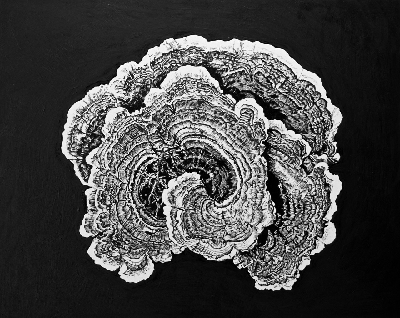 A turkey tail fungus is shown in great detail against a pitch black backdrop. Lines of the fungus, as intricate as lace, are coiled into a black and white natural form.
