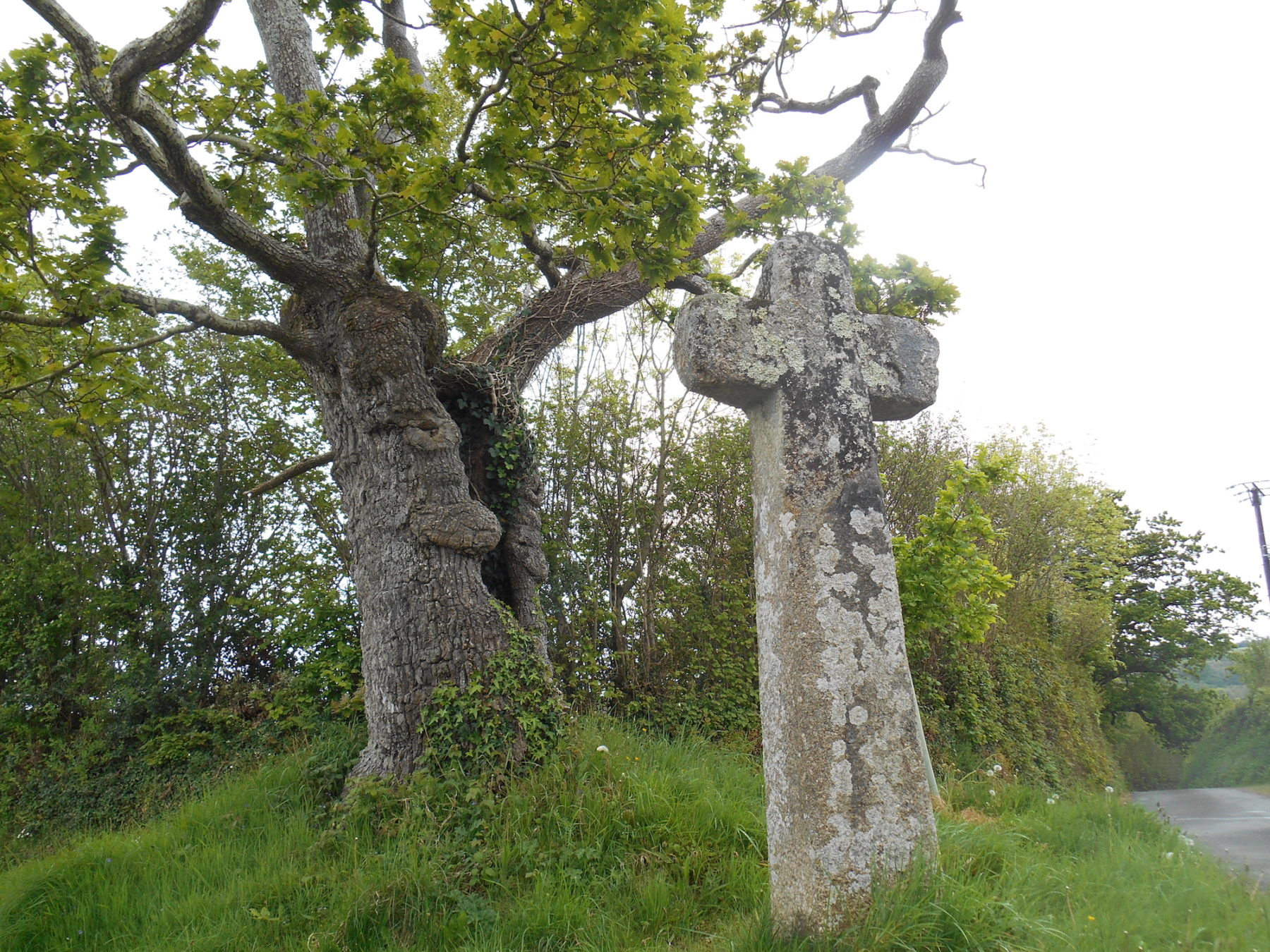 An ancient looking tree with a hole in its centre stands aside a stone cross