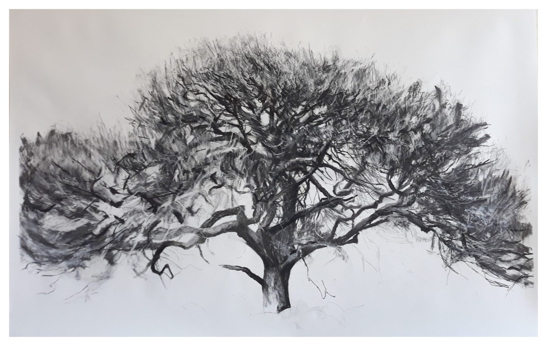 Highly detailed portrait drawing of a single tree rendered in black against a white background