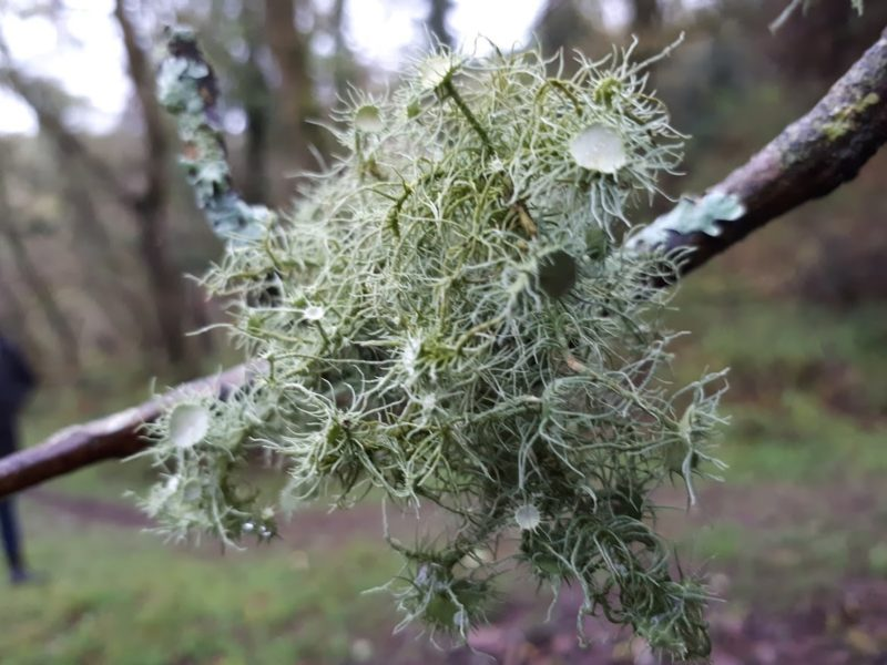 Angela Rumble photograph of Culbone Woods Lichen