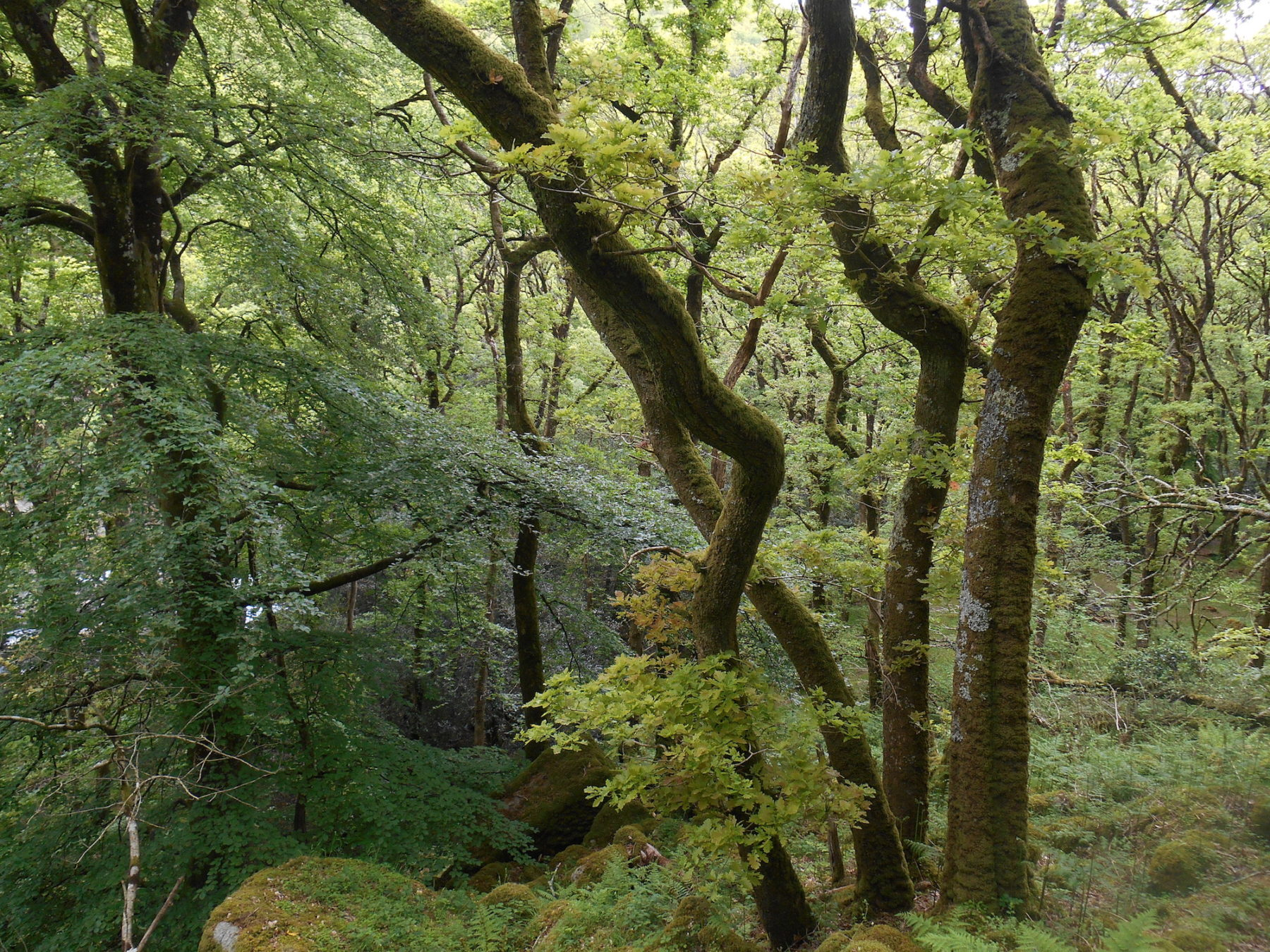 Photograph of the woodland at White Wood