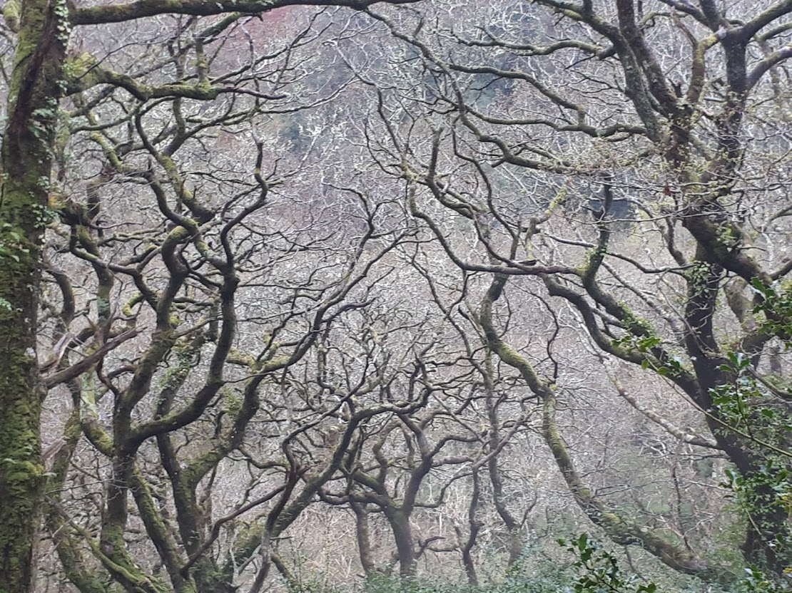 An artist's photograph of bare-branched trees reaching for the sky