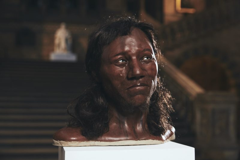 Head and shoulders reconstruction of Cheddar Man