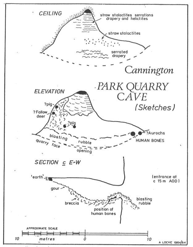 Plan of Cannington Park Quarry Cave